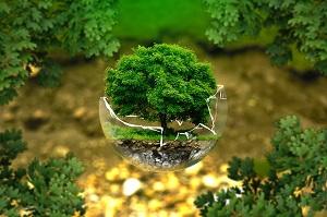 毎年春には全国植樹祭が行われる