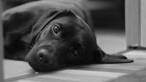 10月1日は黒犬の日
